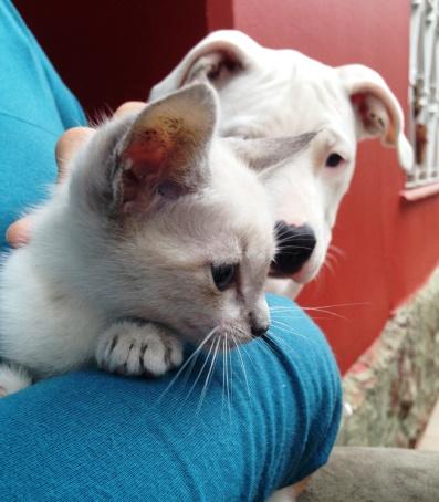 indie e gato 3