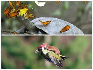pica pau e borboleta