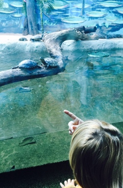 aquario